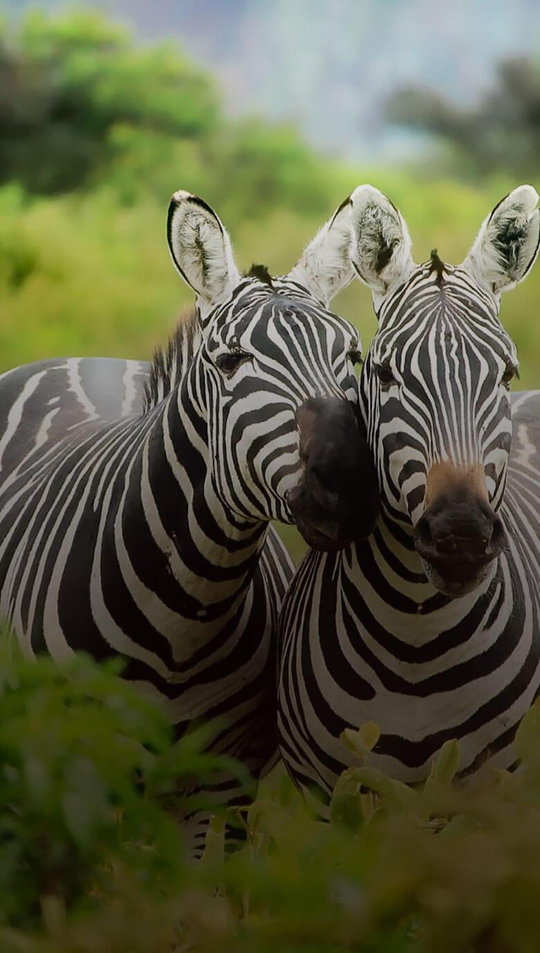 home_animals2_animals9